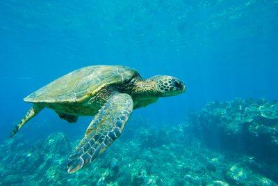 turtle-watching-bocas-del-toro-panama